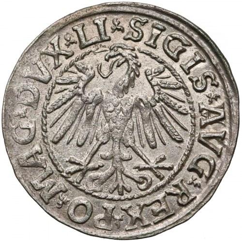 Zygmunt II August, Półgrosz Wilno 1546 - A/VVG - piękny