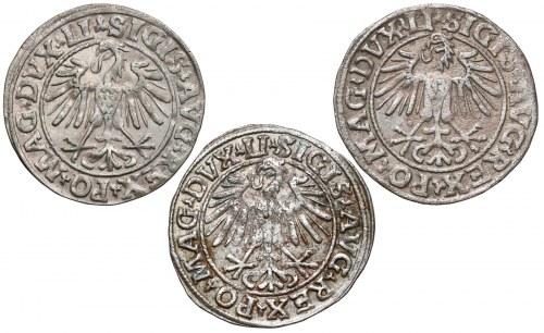 Zygmunt II August, Półgrosze Wilno 1547, 1548, 1549 (3szt)