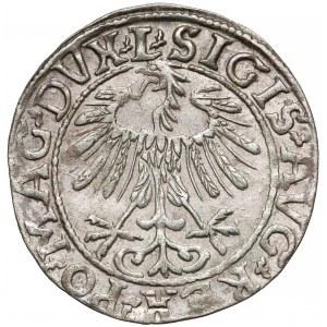 Zygmunt II August, Półgrosz Wilno 1557 - L na Aw.