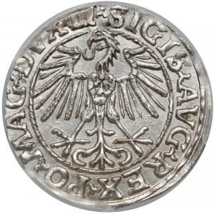 Zygmunt II August, Półgrosz Wilno 1548 - arabska - LI - PCGS MS64