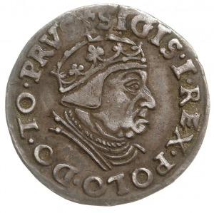 trojak 1539, Gdańsk, na rewersie interpunkcja w postaci...