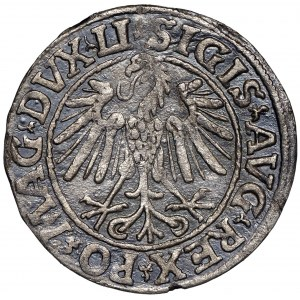 Zygmunt II August, Półgrosz 1547 Wilno - przebitki nieopisany DVCT/AT L/9