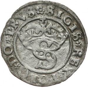 Zygmunt I Stary 1506-1548, szeląg 1529, Toruń.