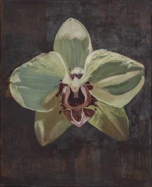 Marcin Strokosz, Orchidea, 2018