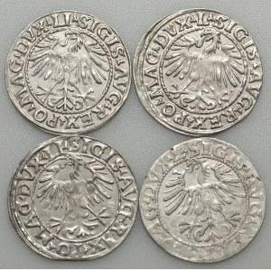 Zygmunt II August, zestaw 4 półgroszy 1548-1562