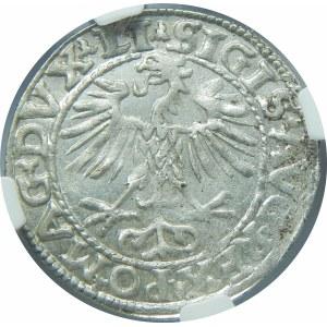 Zygmunt II August, Półgrosz Wilno 1553