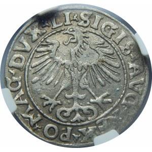 Zygmunt II August, Półgrosz Wilno 1555