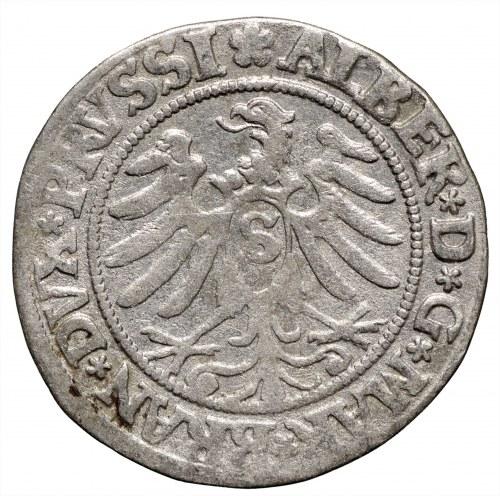 Prusy Książęce, grosz 1532 Królewiec